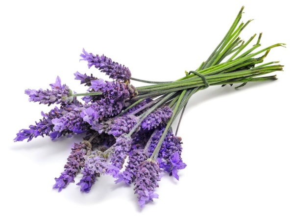 relieve stress with herbs