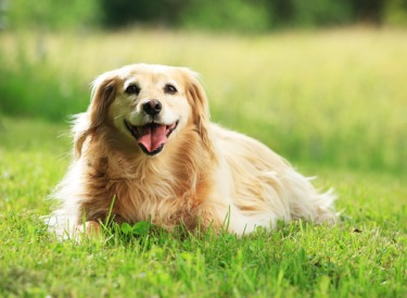 pets help with stress